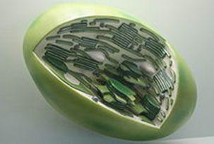 Пластидтер мембраналы органоид
